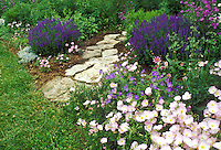 Oenothera blooming in spring garden with color highlights and rock pathway into the heart of the garden from the lawn, Midwest USA