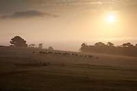 A winter morning, looking out over deers grazing in the fields surrounding Prideaux Place in Cornwall