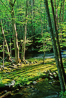 The Little River flows around a small island and through a light streaked spring forest in the Elkmont area, Great Smoky Mountains National Park, Tennessee.