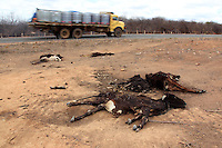 Dead cattle by the highway in the Semi-arid region, known as the sertao, of the northeastern Brazilian state of Pernambuco. The region has dry season every year, but 2012 is considered the worst in 30 years.