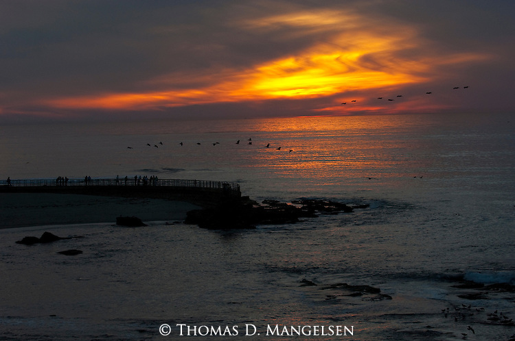 Pelicans and jetty are silhouetted against the sunset in La Jolla, California.