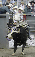 29 August, 2004:  Bull Rider Jerry Shephard 2nd ranked in the world rides the bull Sling Shot during the PRCA 2004 Extreme Bulls competition in Bremerton, WA.