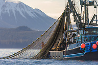 Commercial fishing cape purse seiner draws a net tight in the first 2006 Sitka Sac Roe Herring fishery opener on the north side of Middle island in Sitka Sound, March 2006. Mount Edgecumbe, on Kruzof island in the distance.