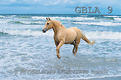 Bob, ANIMALS, collage, horses, photos(GBLA9,#A#) Pferde, caballos