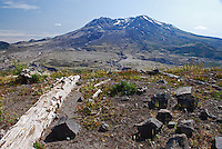 Mount St Helens, Washington State, USA, which last erupted in May, 1980. The rocks and uprooted plants from the eruption have deliberately  left where they landed to illustrate the force of the volcanic action.200809020894, volcano, lava.<br />