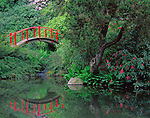 Seattle, WA   <br /> Arched red foot bridge and reflecting pond in spring, Kubota Japanese Gardens