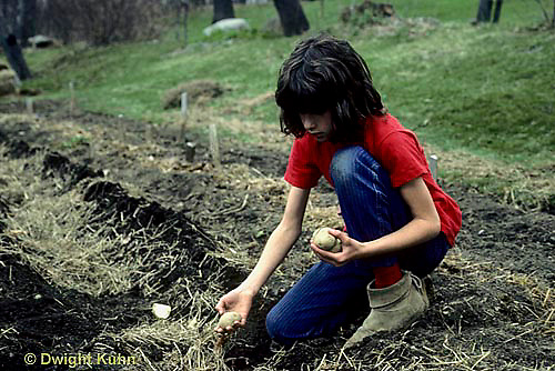 HS05-010z   Potato - child planting potato, Kennebec variety
