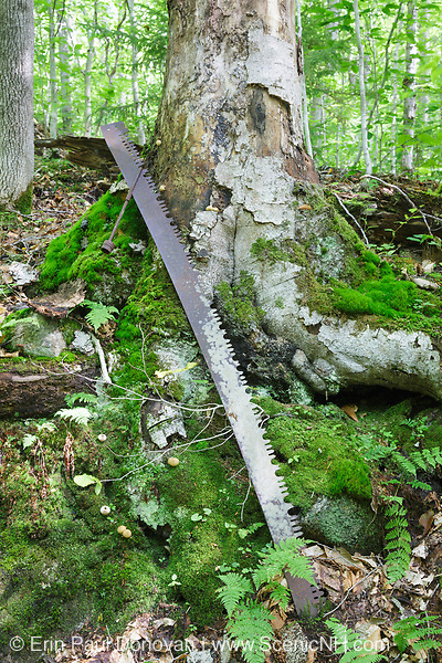 Two man crosscut saw (artifact) along a sled road of the Gordon Pond Railroad in Kinsman Notch of the White Mountains, New Hampshire. This was a logging railroad in operation from 1907-1916. The removal of historic artifacts from federal lands without a permit is a violation of federal law.