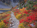Mount Baker-Snoqualmie National Forest, WA <br /> Bright reds and yellows of huckleberries and mountain ash along the trail to Bagley lakes at Heather Meadows near Austin Pass