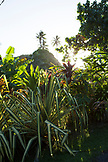 FRENCH POLYNESIA, Tahiti. A landscape of vegetation and trees in Papenoo.