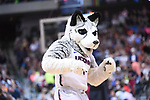 DALLAS, TX - MARCH 31: Connecticut Huskies mascot performs during a timeout during the 2017 Women's Final Four at American Airlines Center on March 31, 2017 in Dallas, Texas. (Photo by Justin Tafoya/NCAA Photos via Getty Images)