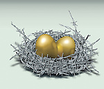 Illustrative image of golden eggs in nest made of barbed wire representing investment protection