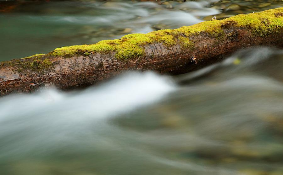 Mossy log in Elwah River, Olympic National Park, Washington