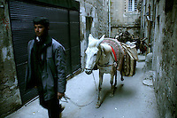 Donkey carrying firewood in Mardin, southeastern Turkey