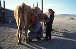 A Tsataan woman and her child milk their cows on Tsataan Uul lake,   Outer Mongolia.