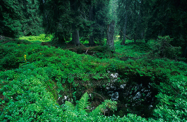 Sink hole in Boedmeren forest, Schwyz, Switzerland
