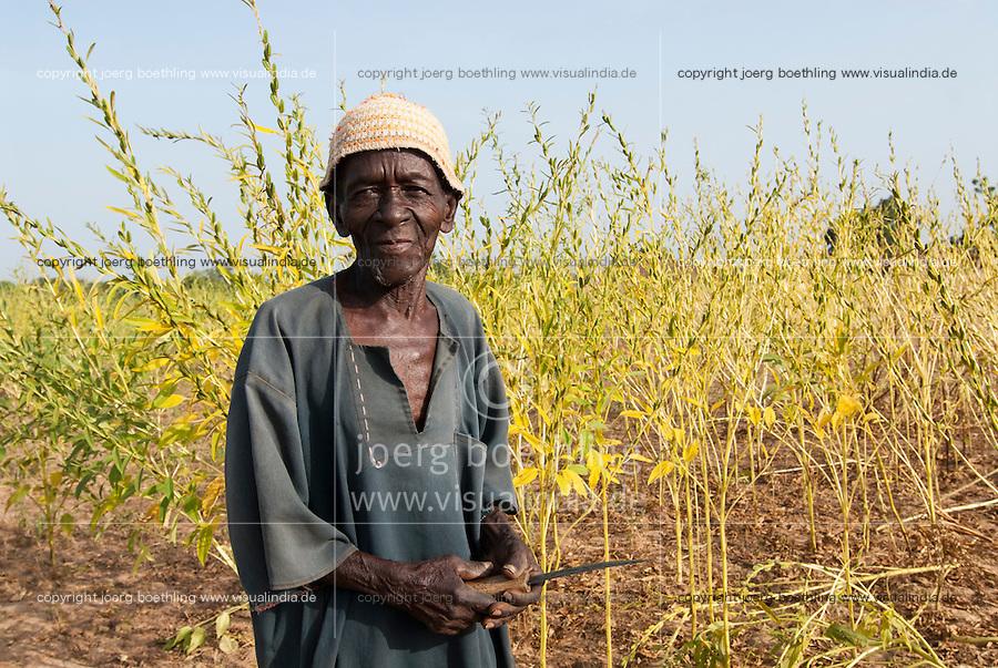 BURKINA FASO, Bobo Dioulasso, farmer in sesame field at farm / Bauer im Feld mit Sesampflanzen