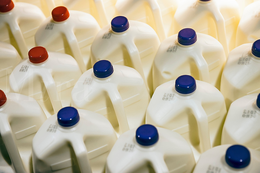 Gallons of organic milk.