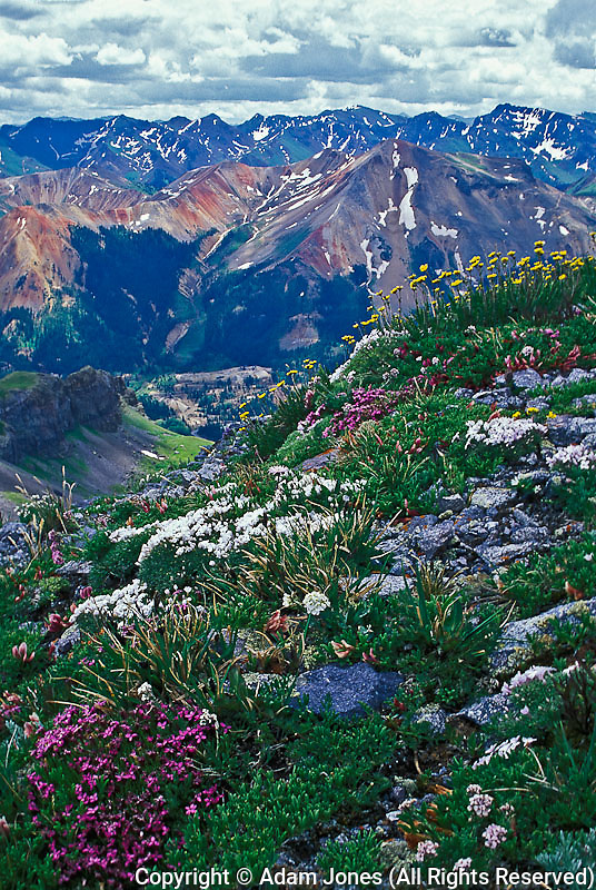 Alpine meadow and Red Mountain from Imogene Pass, Mt. Sneffels Wilderness, Colorado
