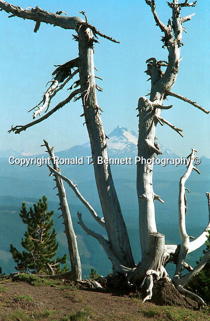Picture of Mt. Adams, Washington from Mt. Hood, Oregon in the Pacific Northwest Cascade Range, USA, Pacific Ocean, Plains, woods, mountains, rain forest, desert, rain, Rose City, Portland, Lake Oswego, Pacific Northwest,FINE ART PHOTOGRAPHY FOR SALE,<br />