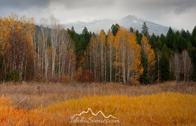 Idaho, North, Idaho Panhandle, Bonners Ferry. Autumn Color in the Curly Creek Valley against the snowcapped Purcell Mountains.