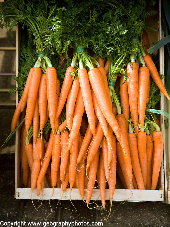 Fresh bunches of carrots in a wooden crate box