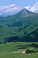 Europe/France/Aquitaine/64/Pyrénées-Atlantiques/Plateau d'Iraty: Pâturages et le Pic des Vautours