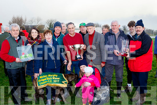 'Ibero Star' won the Mickey Murphy sponsored all aged bitch stakes last Sunday at Lixnaw coursing owned by Pa Joe Murphy and trained by Dab Jo Guiney.