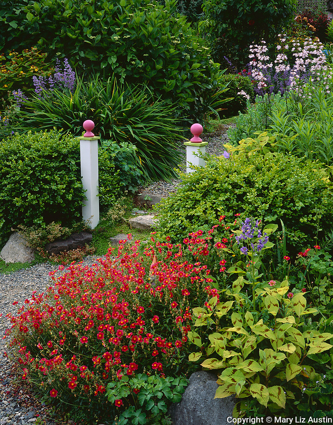 Vashon Island, WA: Two white posts mark the entrance to a garden path with helenium and persicaria in the foreground.