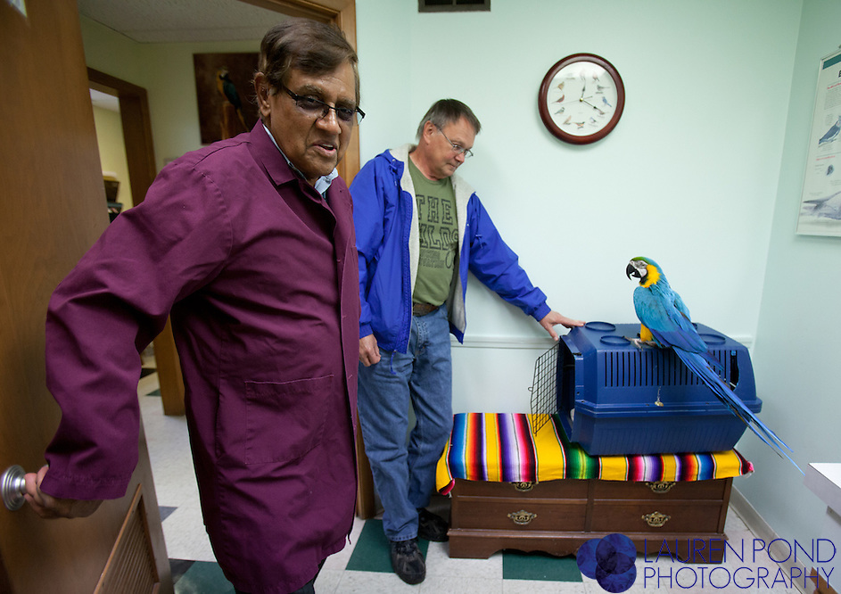 "Dr. Ram Mohan, D.V.M., prepares to examine ""Maggie,"" a blue-and-gold Macaw parrot belonging to Jerry Brandon, of Nelsonville, Ohio, at the Avian Health Clinic Inc. in Reynoldsburg, Ohio, on Oct. 27, 2012."