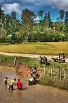 Boys herding cattle across a shallow river in Sandrandahy, Madagascar.