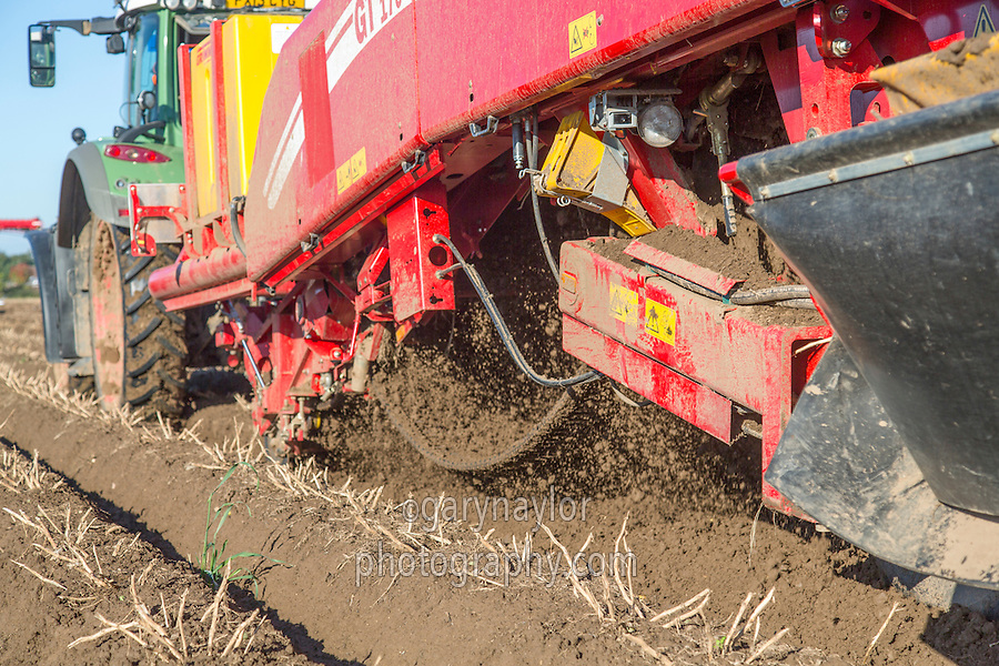 Harvesting Nectar potatoes with a Grimme GT 170 - Lincolnshire, October