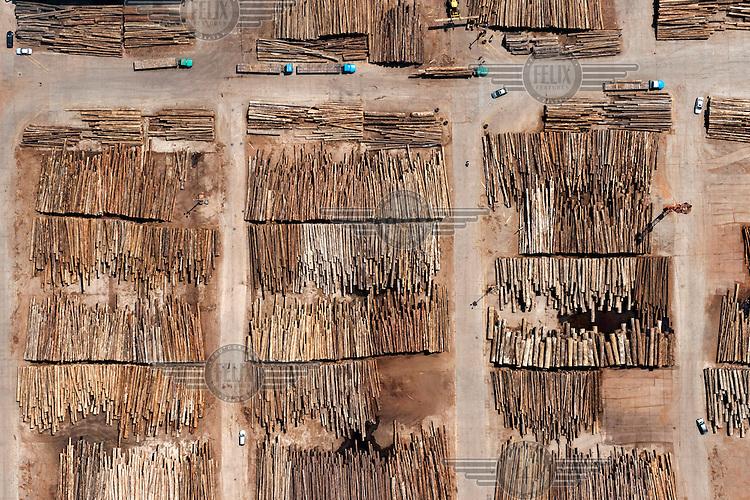 Logs stored at a lumberyard beside the Yangtze River. /Felix Features