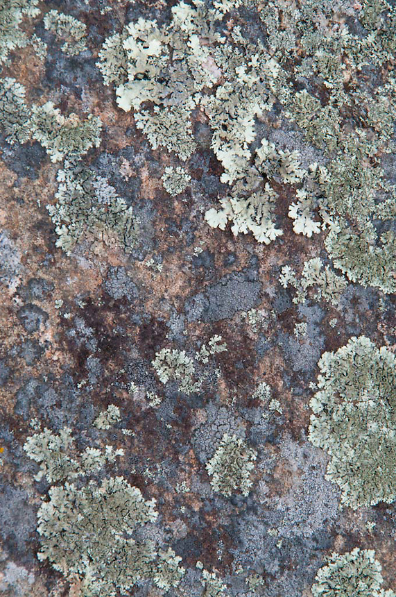 Rock Face and Lichen at Caterpillar Hill, Sedgwick, Maine, US