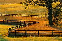 Fence on hores farm at sunrise, Versailles, Kentucky