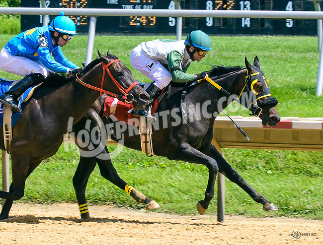 Notthatitmatters winning at Delaware Park on 6/2417