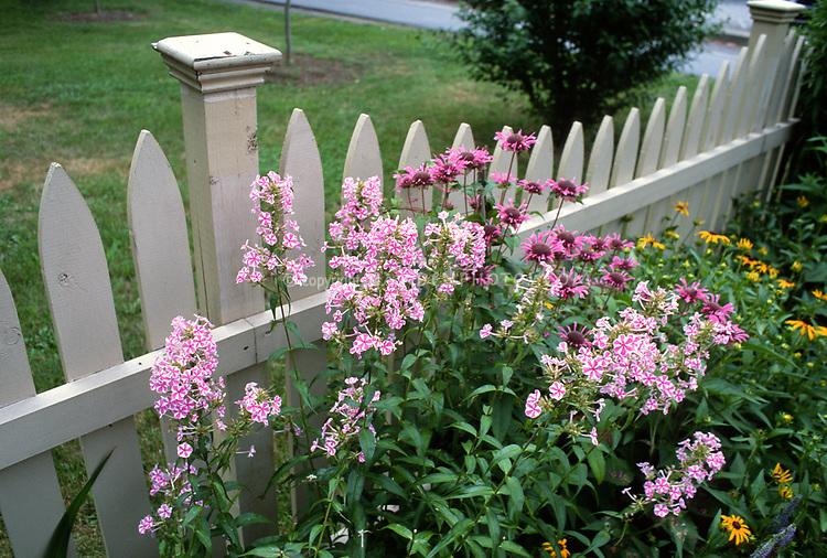 Phlox Natasha, Monarda beebalm, Rudbeckia Goldsturm, and picket fence, perennial flower bed combination