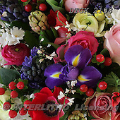 Gisela, FLOWERS, BLUMEN, FLORES, photos+++++,DTGK2138,#f#