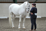 Classes 1 to 6. Unaffiliated Showing. Brook Farm training centre. Stapleford abbots. Essex. 11/03/2018. ~ MANDATORY CREDIT Garry Bowden/SIPPA - NO UNAUTHORISED USE - +44 7837 394578