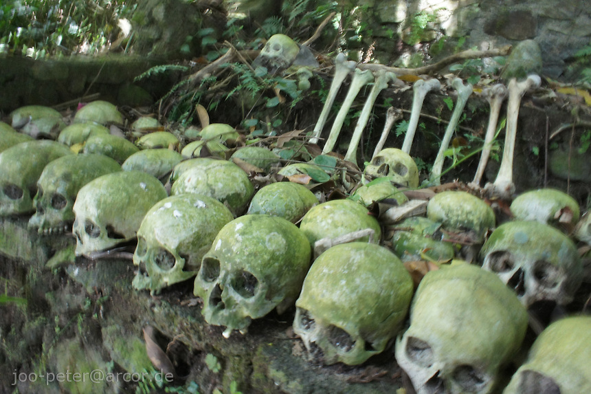 skulls and bones  in the forest cemetery of Bali Aga village Trunyan at Lake Batur, vulcano Mount Batur, Bali,  archipelago Indonesia
