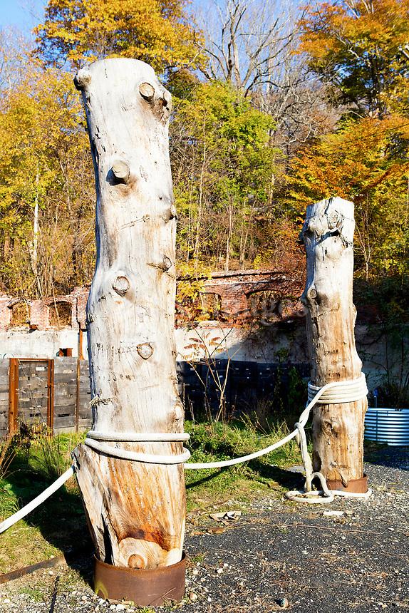 Logs in the yard