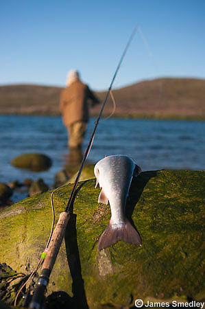Man fly fishing for Arctic char in an inlet river of the ocean in Nunavut, Canada.