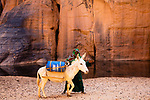 Chad (Tchad), North Africa, Sahara, Ennedi, young woman loading water canisters onto donkey in a canyon