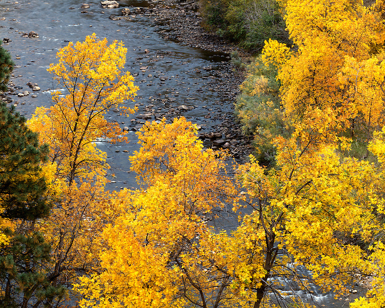 Fall color along the Cache la Poudre River; Roosevelt National Forest, CO