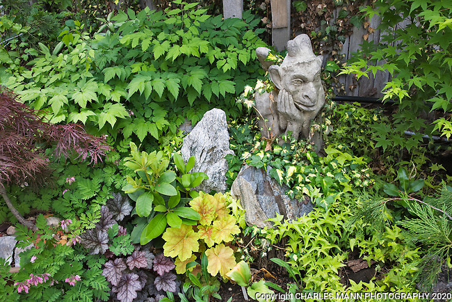 A stone gargoyle is just one of many textures and colors in a shady spot, including varigated ivy, hucheras, Japanese maples, and Dicentras in Dan Johnson's Denver garden.