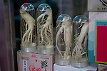 Ginseng samples, Seoul, South Korea