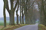 Europa, DEU, Deutschland, Schleswig Holstein, Naturpark Lauenburgische Seen, Sterley-Kogel, Baeume, Allee, Baumallee, Strasse, Kategorien und Themen, Natur, Umwelt, Landschaft, Jahreszeiten, Stimmungen, Landschaftsfotografie, Landschaften, Landschaftsphoto, Landschaftsphotographie, Naturschutz, Naturschutzgebiete, Landschaftsschutz, Biotop, Biotope, Landschaftsschutzgebiete, Landschaftsschutzgebiet, Oekologie, Oekologisch, Typisch, Landschaftstypisch, Landschaftspflege....[Fuer die Nutzung gelten die jeweils gueltigen Allgemeinen Liefer-und Geschaeftsbedingungen. Nutzung nur gegen Verwendungsmeldung und Nachweis. Download der AGB unter http://www.image-box.com oder werden auf Anfrage zugesendet. Freigabe ist vorher erforderlich. Jede Nutzung des Fotos ist honorarpflichtig gemaess derzeit gueltiger MFM Liste - Kontakt, Uwe Schmid-Fotografie, Duisburg, Tel. (+49).2065.677997, ..archiv@image-box.com, www.image-box.com]