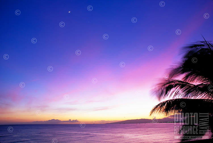 Palm fronds are silhouetted against a purple and pink glowing sunset with the moon rising above the ocean.