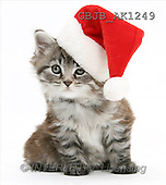 Kim, CHRISTMAS ANIMALS, photos, kitten, santa hat(GBJBAK1249,#XA#) stickers