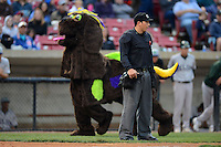 Umpire Sam Vogt on the field as BirdZirk! mascot walks in the background during a game between the Kane County Cougars and Beloit Snappers May 26, 2013 at Fifth Third Bank Ballpark in Geneva, Illinois.  Beloit defeated Kane County 6-5.  (Mike Janes/Four Seam Images)